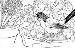 Coloring Sheets for Kids - 2