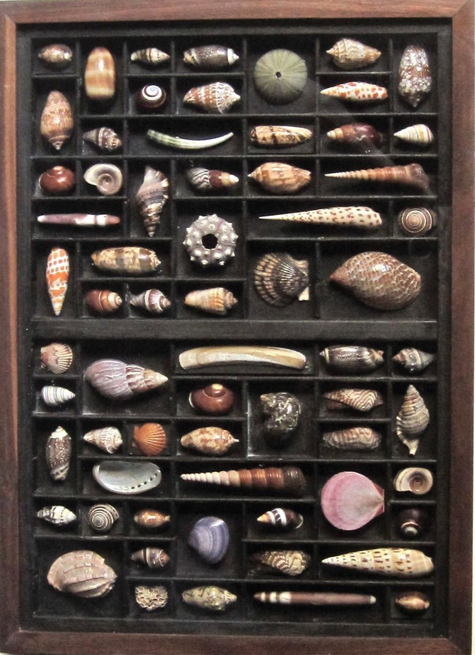 Seashell art, mixed media assemblage, a seashell collection, in an ...