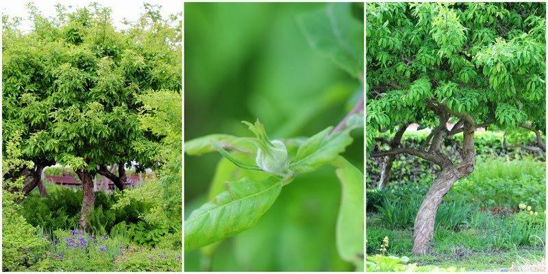 DE STORE I KLASSEN - Garden trees