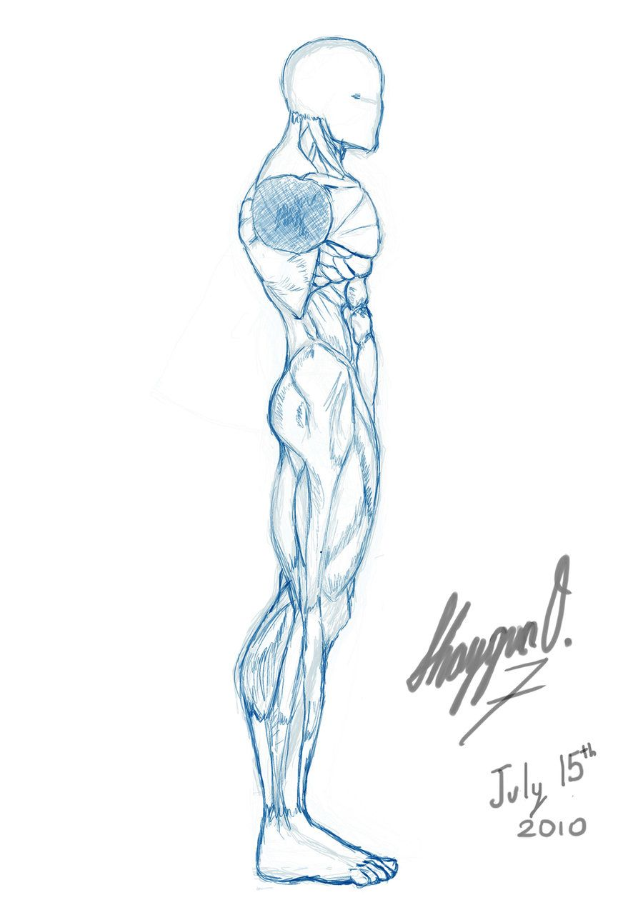 male drawing template | Male Anatomy Template: Side by ~Shintenzu on ...