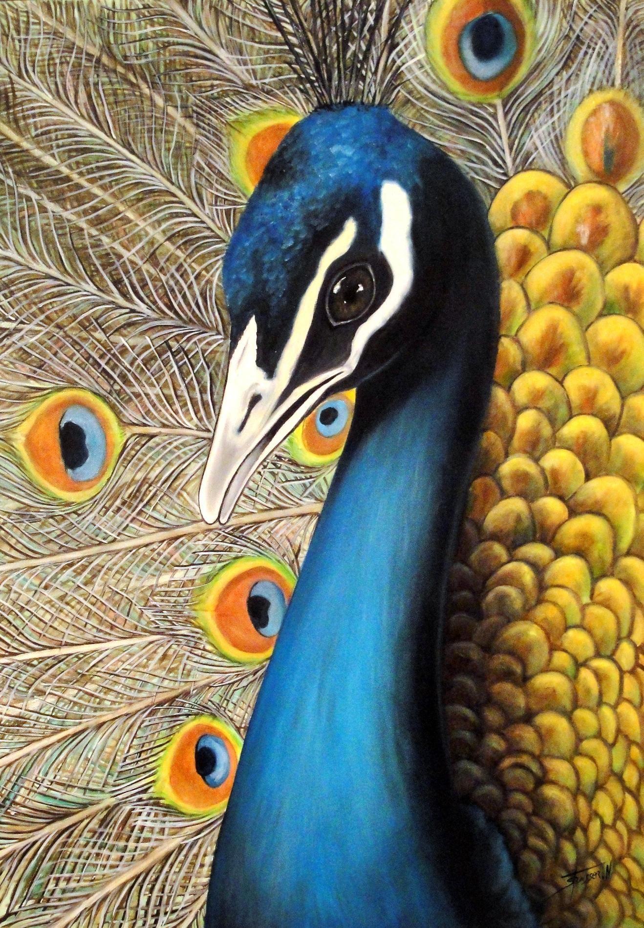 Paon peinture huile sur toile animaux peacock art - Dessin de paon ...
