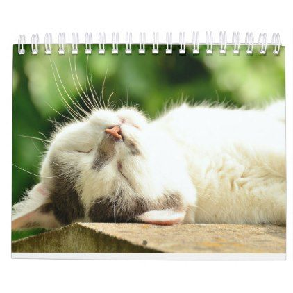 2018 Cats Calendar Zazzle Com Cat Sleeping Cats Cat Shots