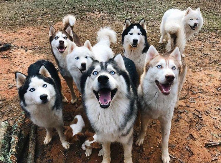 Pinterest Ashlyn2305 Dog Breeds Cute Animals Dog Lovers