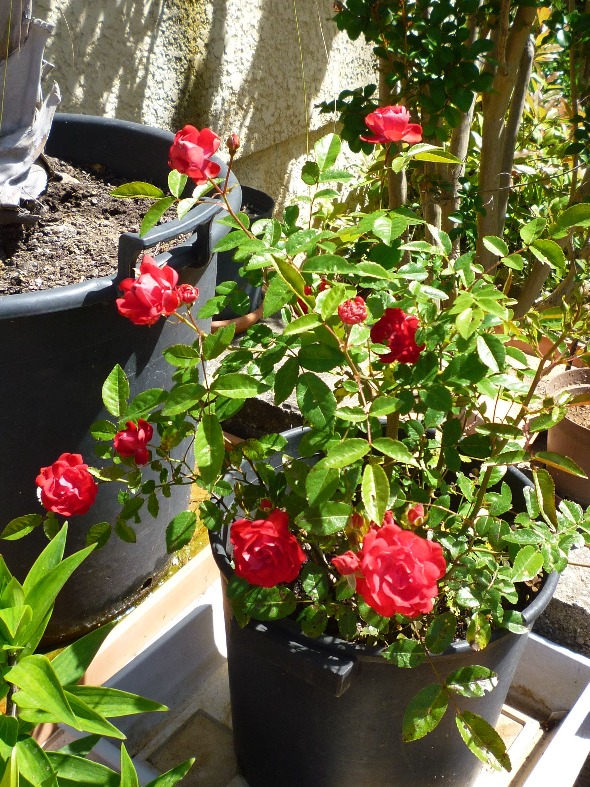 5b8e0dad3797c7c2abb68bc6cdaafaf4 Luxe De Fleurs De Jardin Des Idées