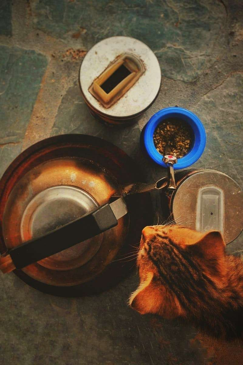 Easy Cat Care A Cat S Behavior Is Definitely A Elaborate