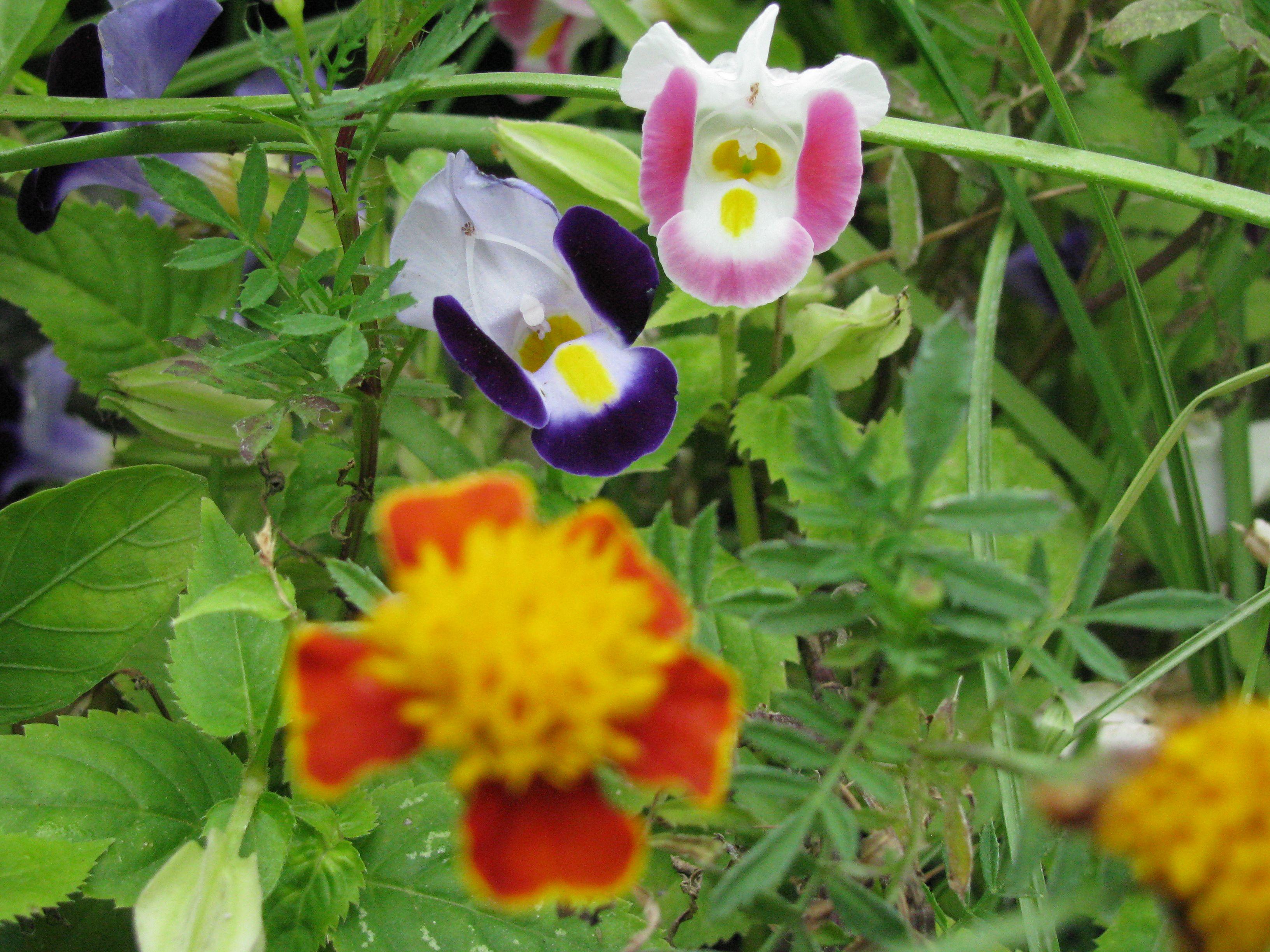 Little flowers from Saraburi