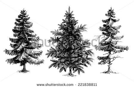 Pine Trees Christmas Trees Realistic Hand Drawn Vector Set Isolated Over White Tree Drawings Pencil Christmas Tree Sketch Tree Sketches