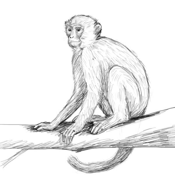 How To Draw A Monkey With Images Monkey Drawing Monkey Art