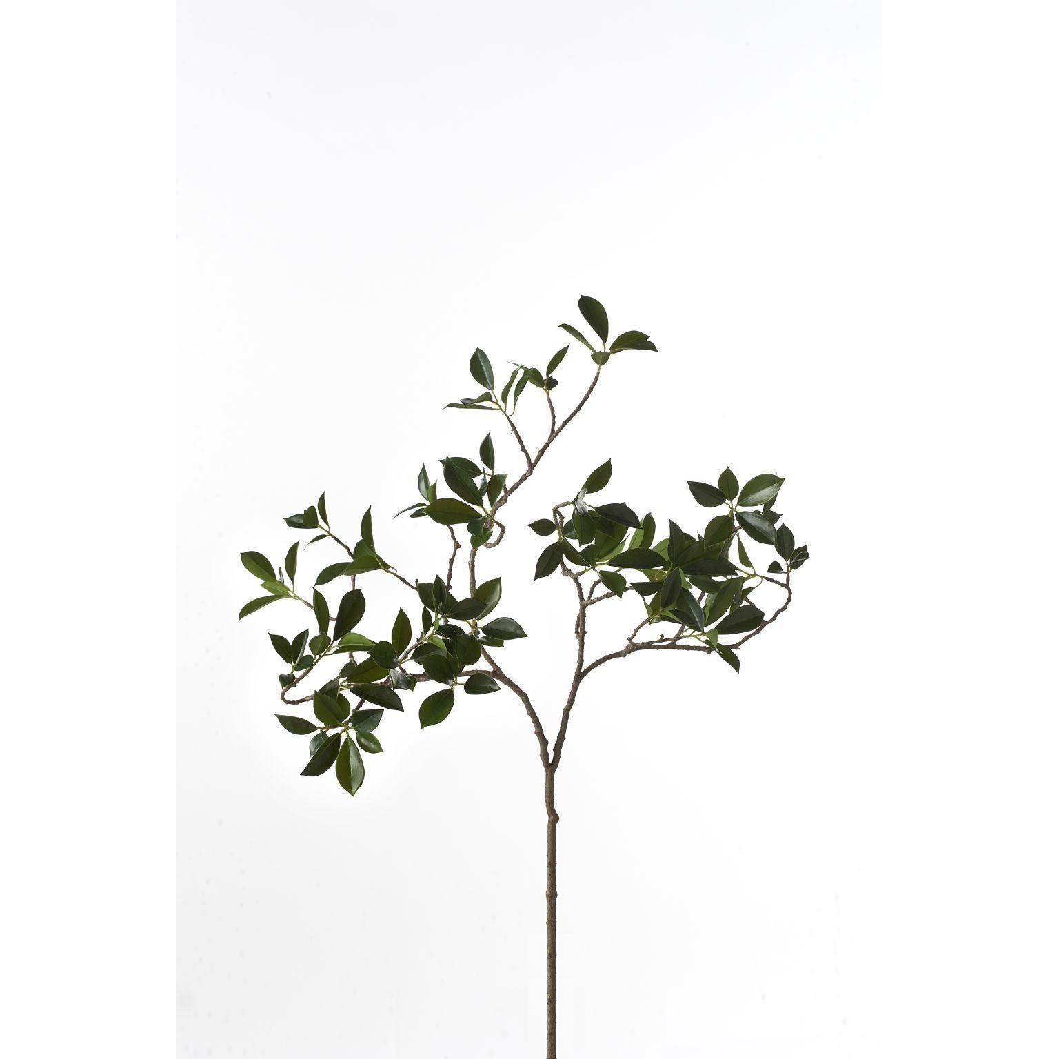 Sage & Co Citrus Leaf Branch
