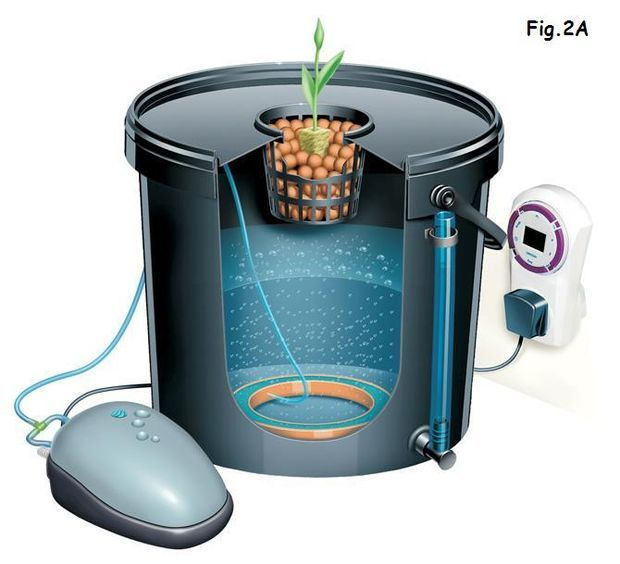 My Indoor DWC Hydroponics System Deep water, Hydroponics and