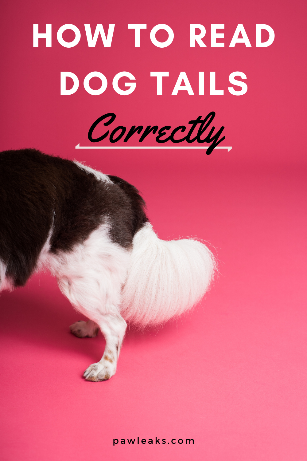 Dog Tail Down Or Up And Stiff Dog Tail Meaning Explained Dog Body Language Dog Tail Meaning Dog Tail