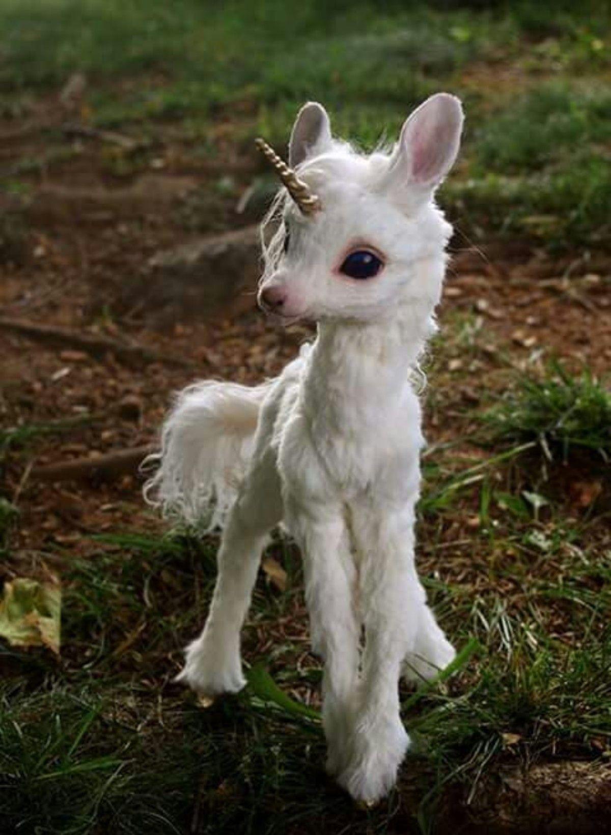 So cute !! | Słodziaki | Cute animals, Unicorn i Baby unicorn