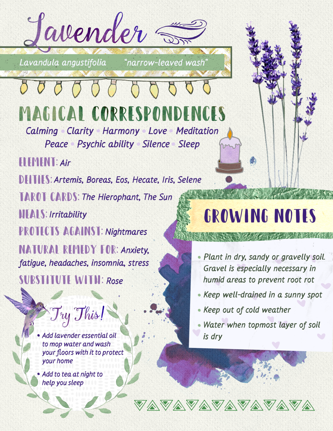 "tysmiha-witchnotes: ""Lavender, for my digital grimoire :) Basil 
