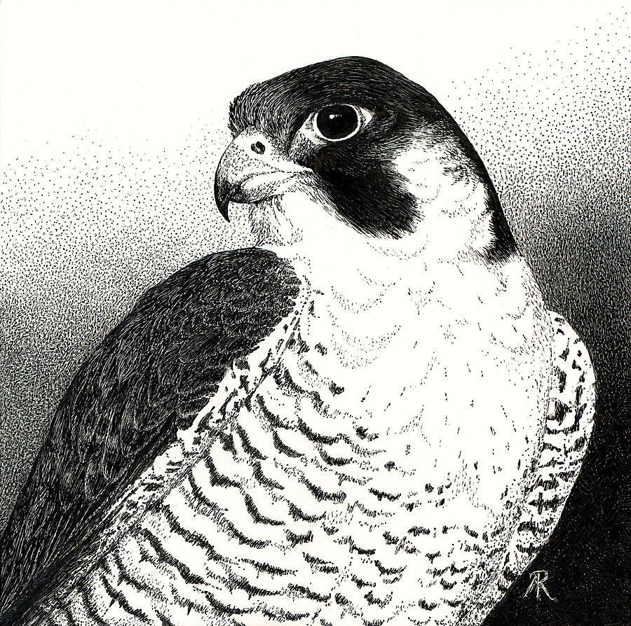Peregrine Falcon Com Imagens Aves De Rapina Falcao Peregrino