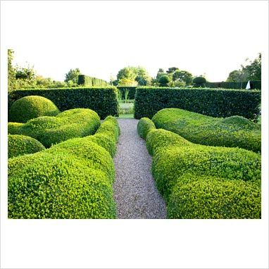 Gravel path through topiary garden with clipped Buxus -
