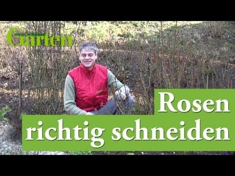 ▶ Rosen richtig schneiden - YouTube