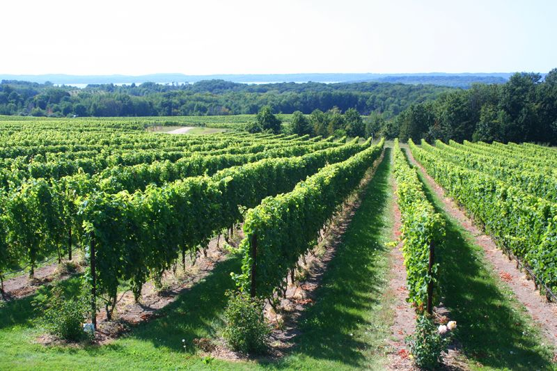 Lots Of Vineyards And Wineries In Traverse City Mi Traverse City Mi Traverse City Pure Michigan