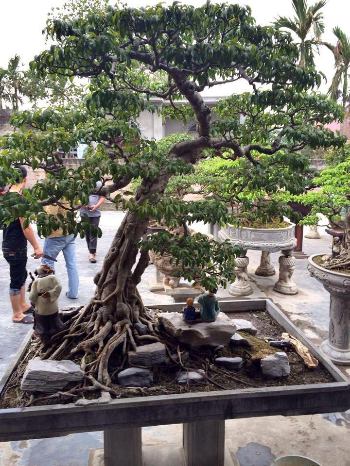 Bonsai Bonsai Trees Pinterest Bonsai Ikebana And Bonsai Art