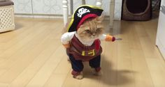 This cat dressed as a pirate just won Halloween