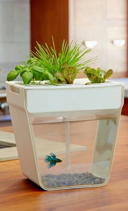 Self cleaning fish bowl