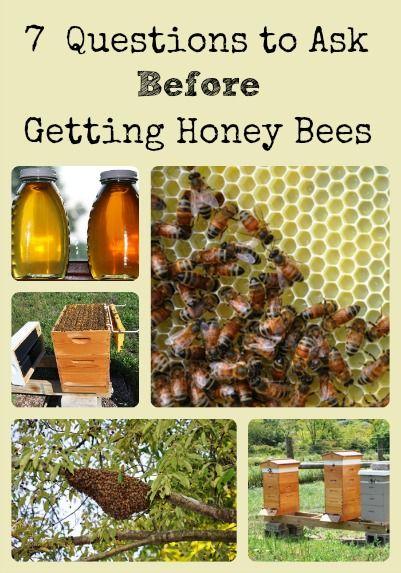 die besten 25 honigbienen haltung ideen auf pinterest bienenhaltung bienen und bienenzucht. Black Bedroom Furniture Sets. Home Design Ideas