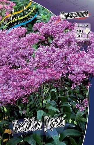Цветок посконник фото посадка и уход