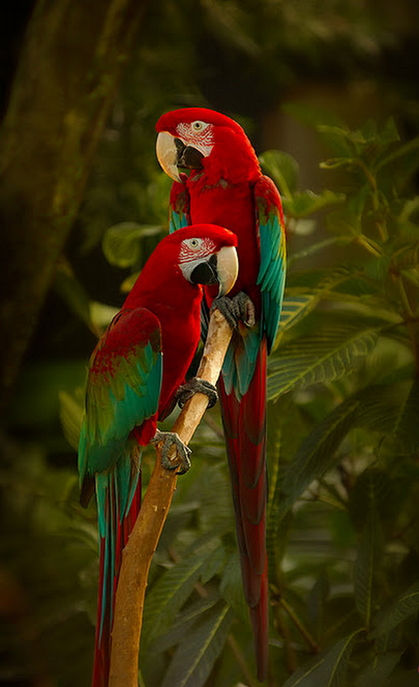 Flying Jewels, God`s Awesome & Gorgeous Creation. — Beautiful birds!