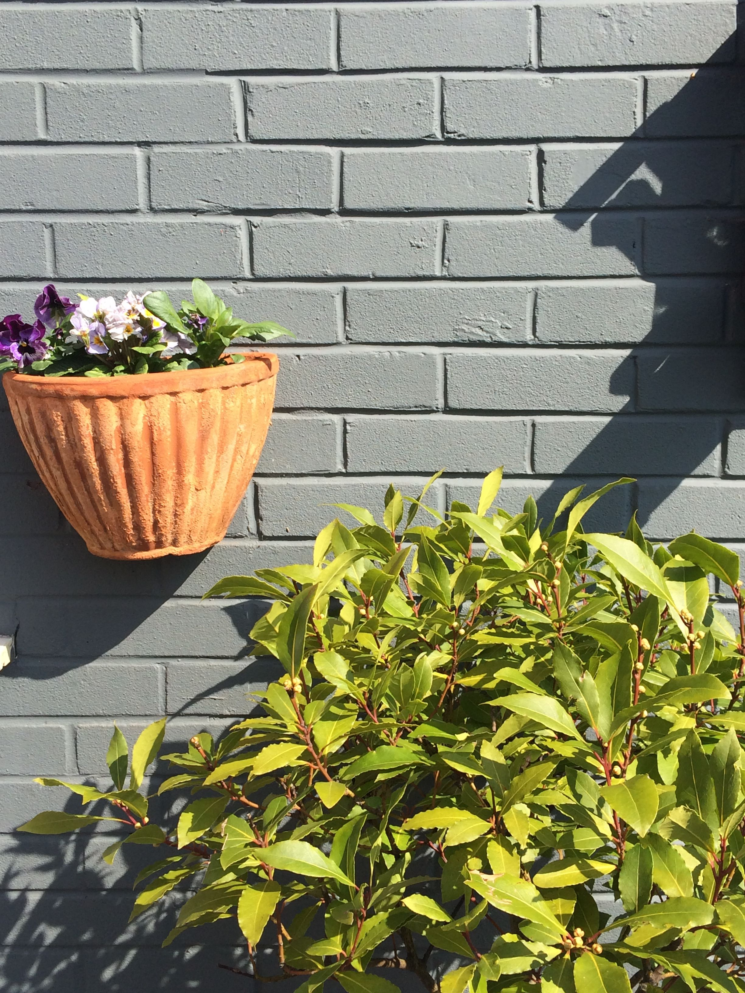 Wall painted in Farrow and Ball \'downpipe\'. | Jo\'s home and garden ...