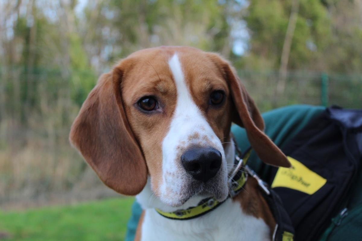 Bertie Dogs Dogs Trust Rescue Dogs