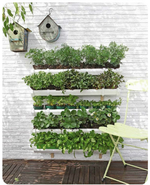 Cheap Or Free Container Gardens