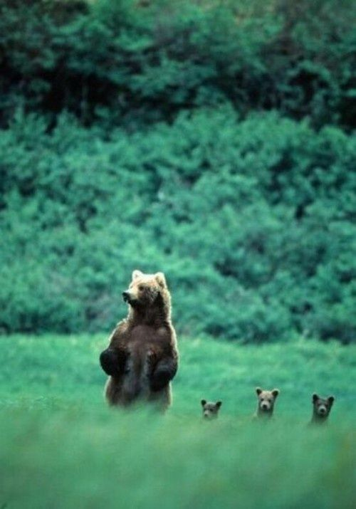 mama bear and triplets. I'm sure I've pinned this before but it's so cute not to pin again. - KMK