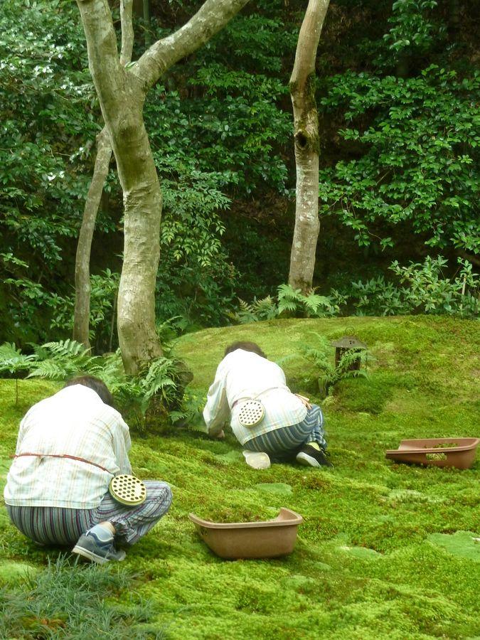 Tending a moss garden in kyoto japan by stephen - Moosgarten kyoto ...