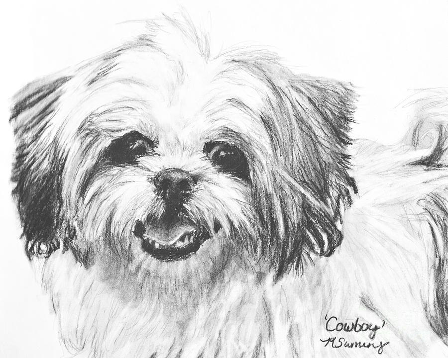 Smiling Shih Tzu By Kate Sumners Shih Tzu Dog Dog Paintings
