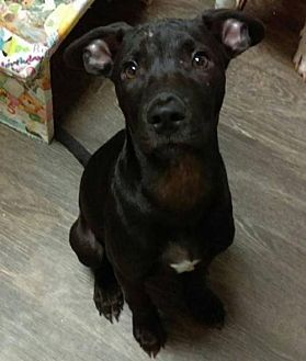 Pin On Needs Adopted