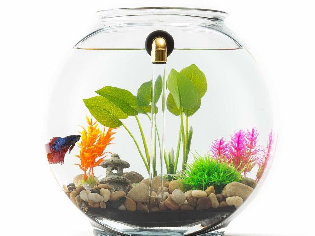 Noclean Aquariums Gravityflow2 Glass Self Cleaning Fish Tank