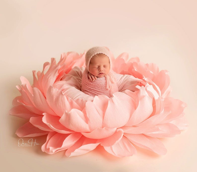 Grande Rosa Beb/é Durmiente