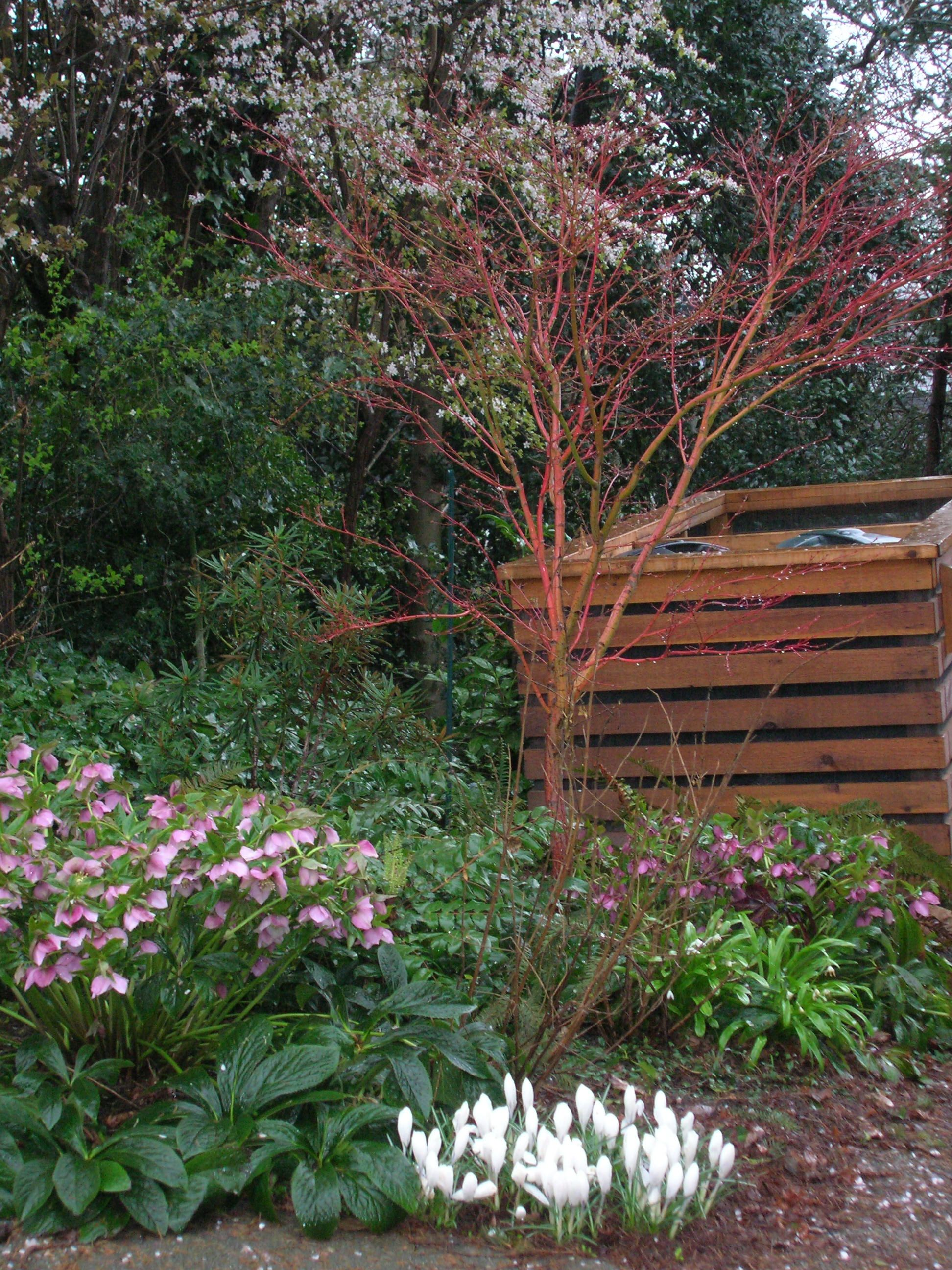 winter garden designed by lucinda o u0027halloran of spirit garden