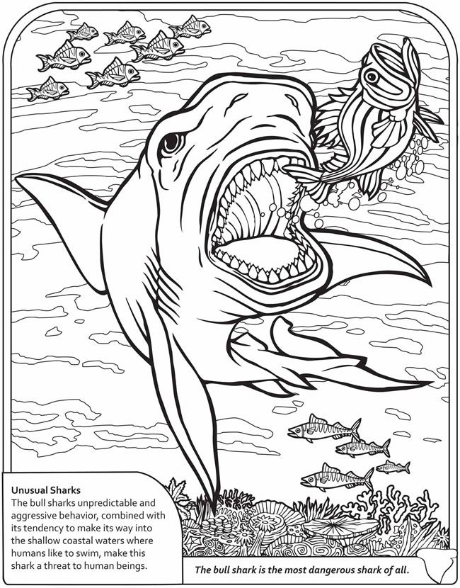 Dinosaur And Sharks Coloring Pages Shark Coloring Pages Adult