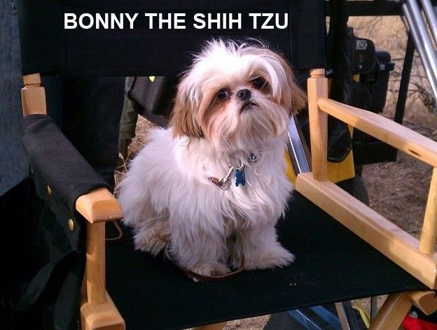 Seven Psychopaths Bonny The Shih Tzu So Cute Shih Tzu Shih