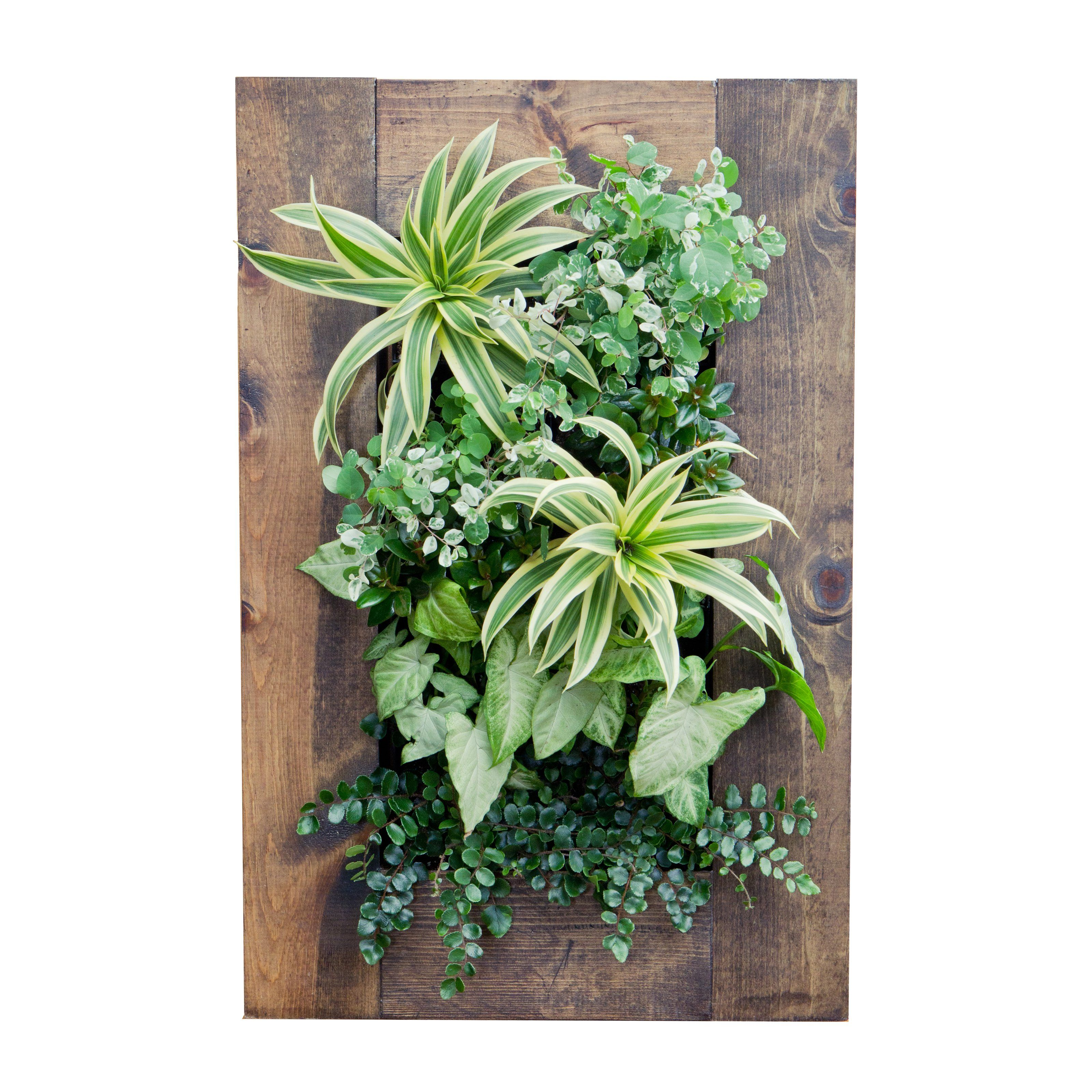 Grovert Mc Living Wall Planter Hang A Piece Of Art On Your Walls With The