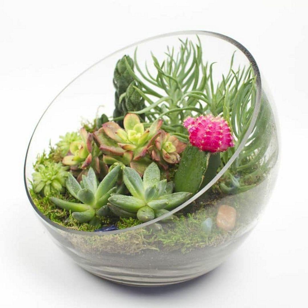 15 Awesome Indoor Succulent Garden Design Ideas Diy Terrarium