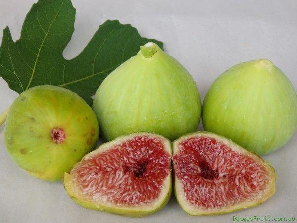 Http Plant Daleysfruit Com Au Trees M Fig White Adriatic 102 Jpeg Fig Varieties Fig Plant Shade Garden Plants