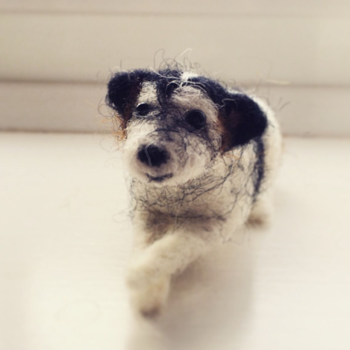 I love making people's pets, especially lovely dogs like this very sweet jack Russell cross x