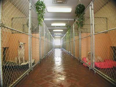 Dog Kennel Designs Indoor Dog Kennels Houses Plans