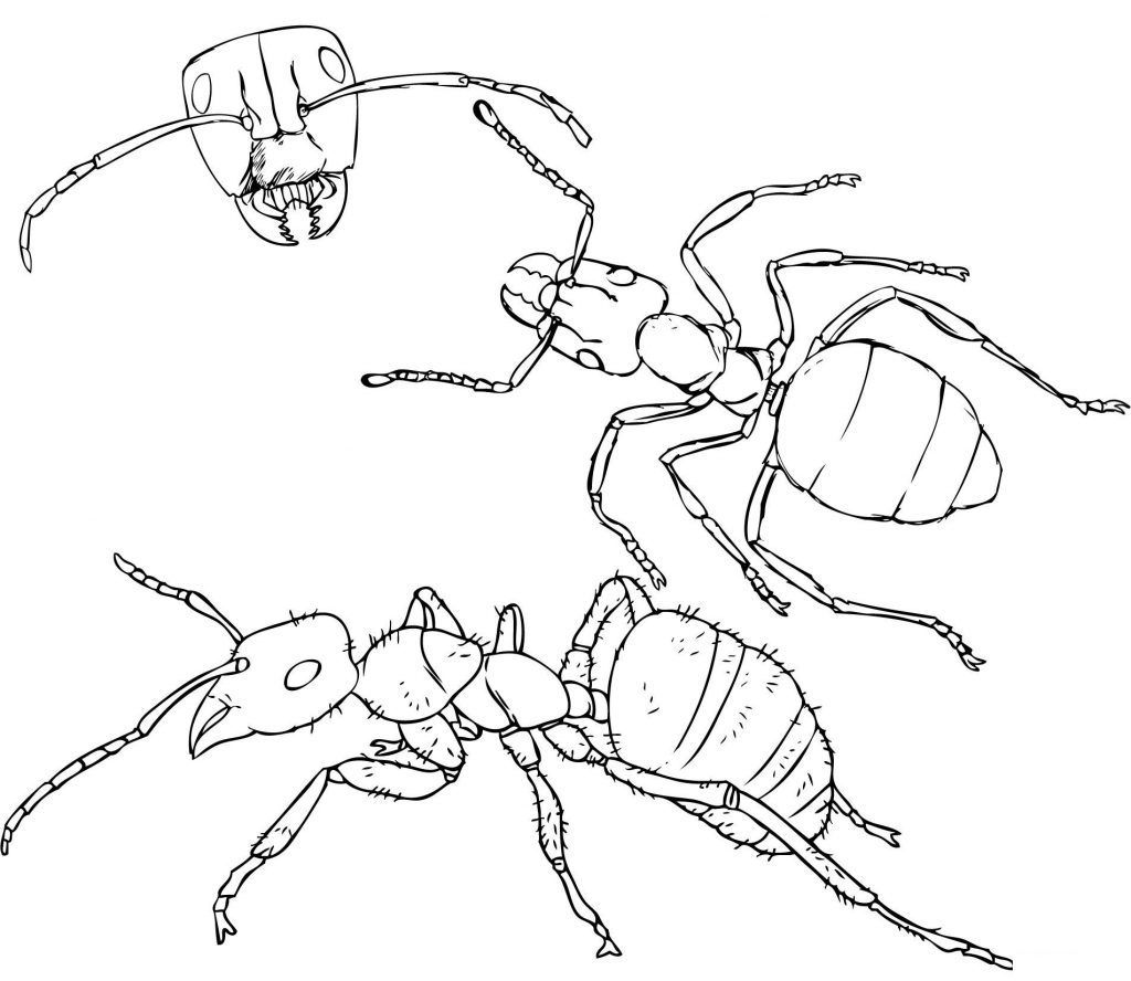 - Ant Coloring Pages Insect Coloring Pages, Coloring Pages For