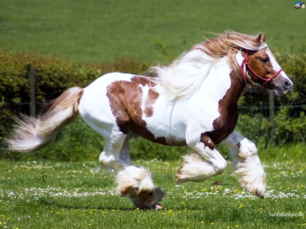 Horses hd wallpaper 66 ones of most beautiful creatures to the horses hd wallpaper 66 thecheapjerseys Choice Image