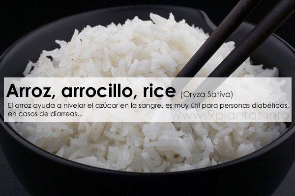 Arroz, arrocillo, rice (Oryza Sativa) 9Plantas