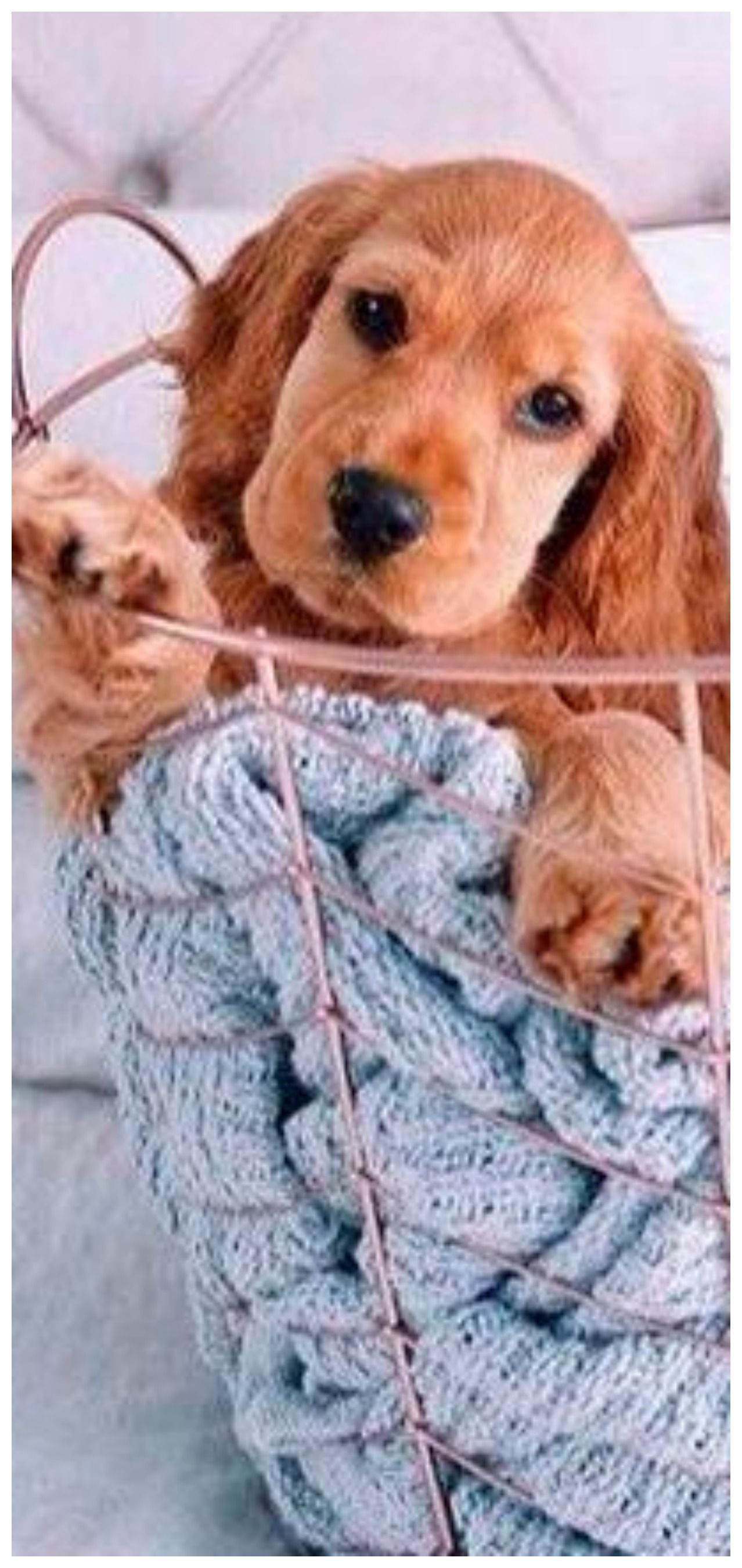 Pin By Tam S Boards On The Pet Store Puppy Pictures Dog Life Pet Dogs