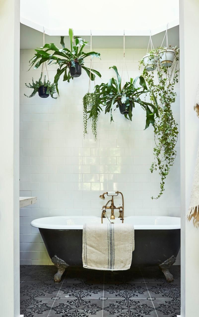 Bathroom with hanging plants and skylight Boudoir