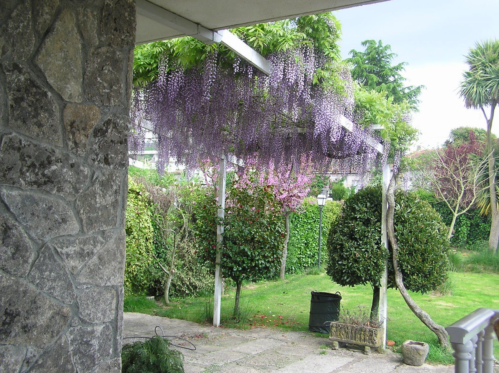 Enredaderas o trepadoras para cubrir pared en jardin for Jardines en paredes